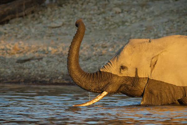 Chobe - Botswana - 2014