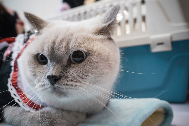VividSnaps-The-Seletar-Mall-CAT-Dress-Up-Contest-131.jpg