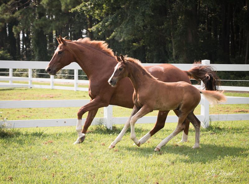 foals2016july-50.jpg