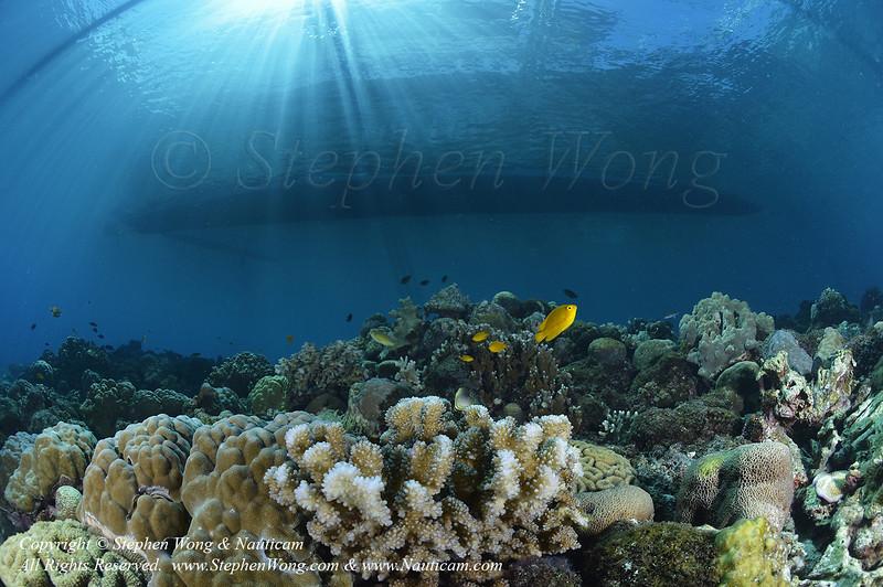 Reef & Dive Panga 01 0829 Stephen WONG.jpg