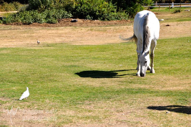 EB&Horses-057.jpg