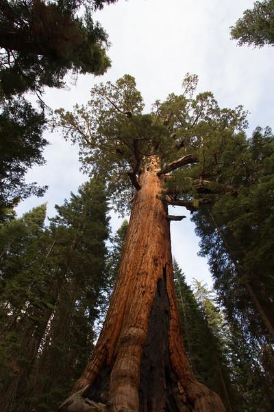 20150504-Yosemite-7D-IMG_6476.jpg