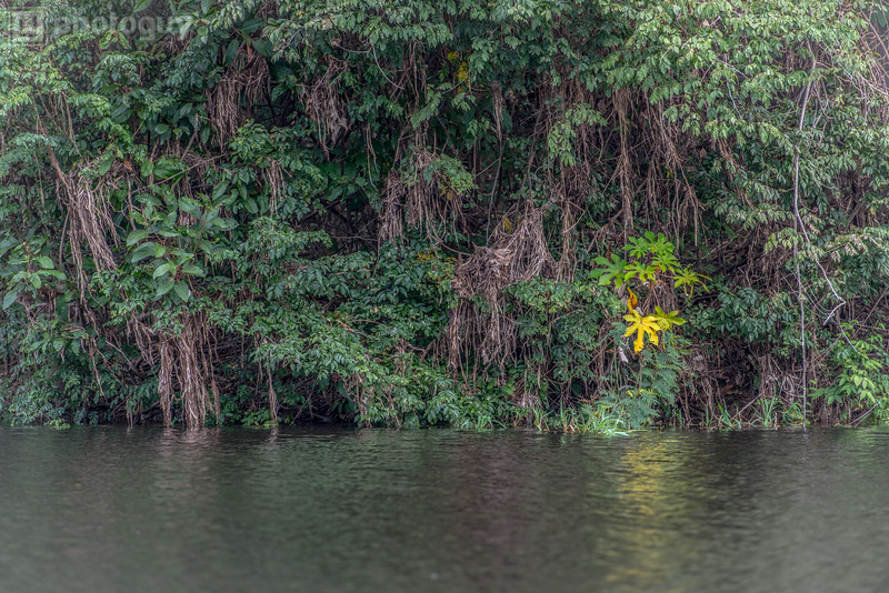 20140120_AMAZON_JUNGLE (16 of 72)