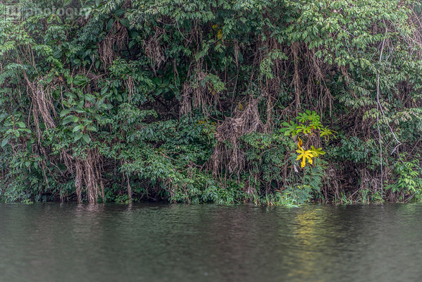 20140120_AMAZON_JUNGLE (16 of 72)