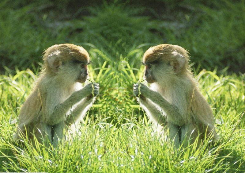 monkey see monkey do.jpg