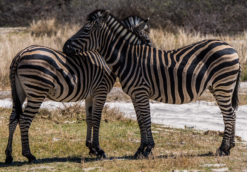 Botswana_June_2017 (640 of 6179).jpg