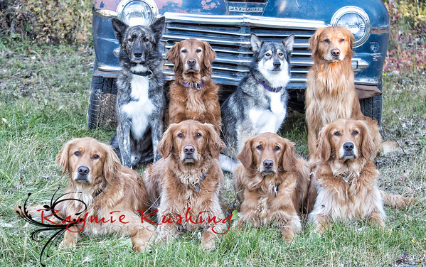 Rushing Dogs 2015 (puppies turn 3)