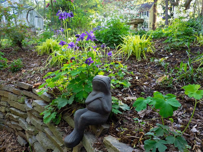 Garden_apr16-4170063.jpg
