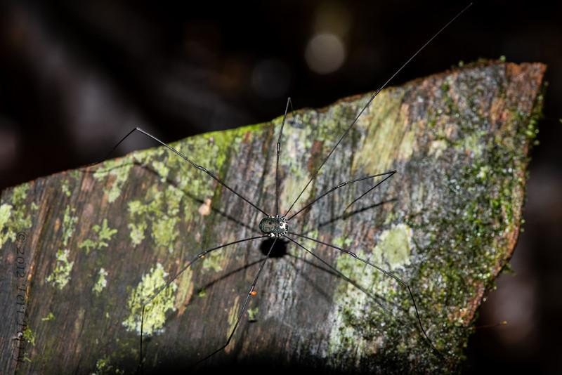SPIDER - -0451.jpg