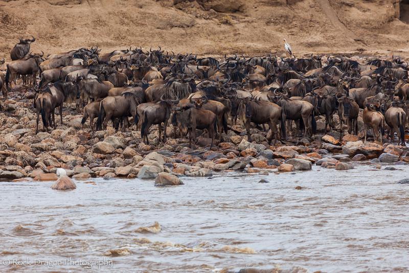 North_Serengeti-36.jpg