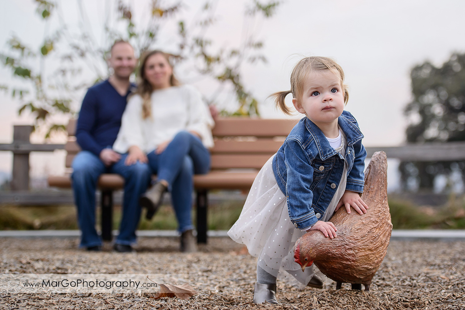 little girl in white dress and jeans jacket standing next to brown hen with father wearing navy blue sweater to mother in white blouse sitting on the bench in background during family session at San Jose Martial Cottle Park