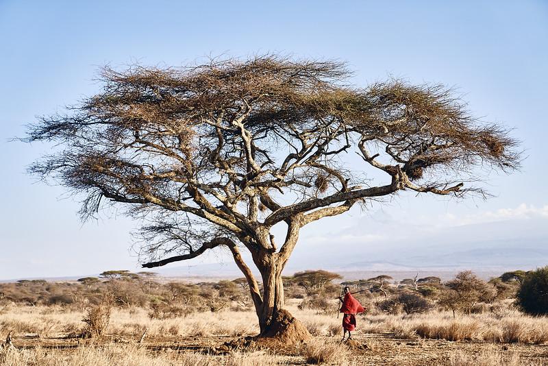 Amboseli_DSC08535.jpg