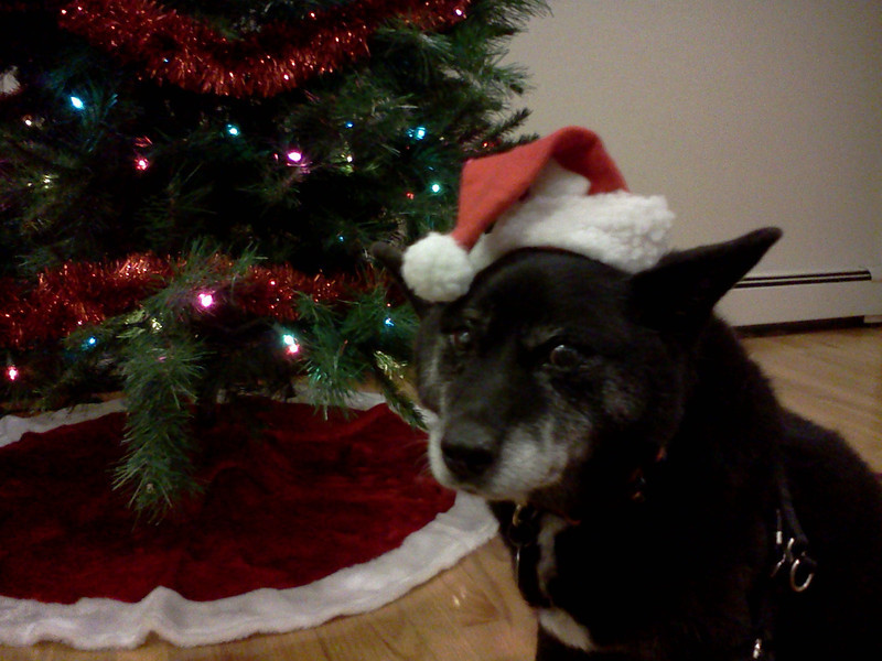 Reagan The Railroad Dog Hopes You All Have A Wonderful Christmas Season.