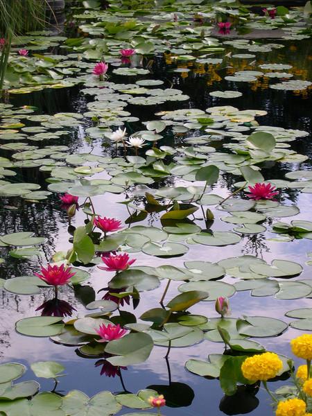 lilies435.jpg