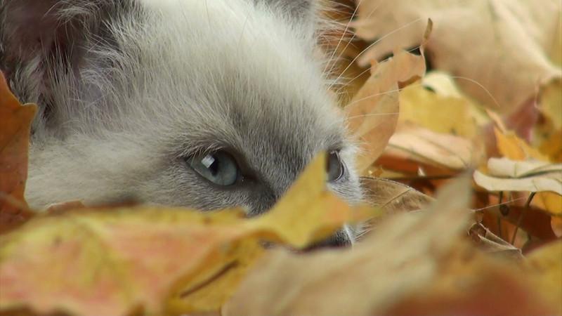 kitten_leaves_12.mov