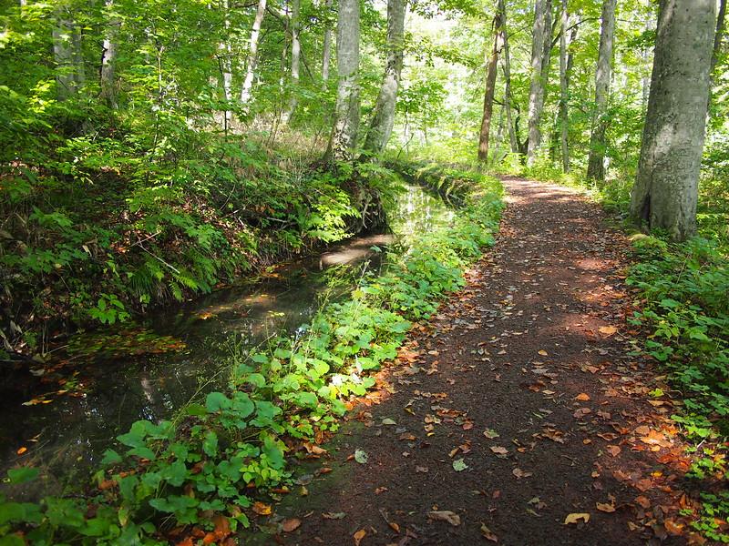 P9307862-path-to-tsutanuma-swamp.JPG