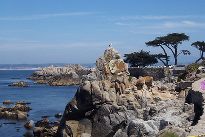 Pacific Grove, Ca.