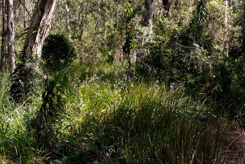 Boondall Wetlands Reserve #3.jpg