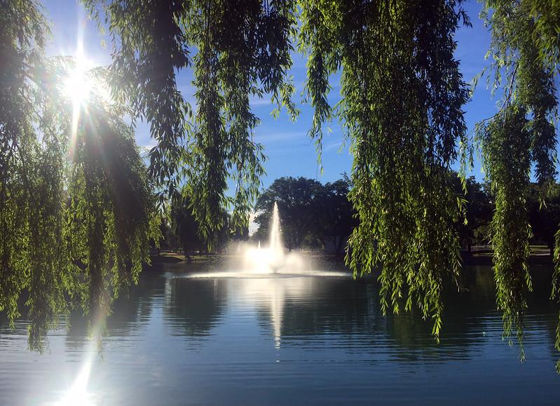 sunny pond.jpg