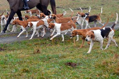 010916 - Bleu Dog Farm