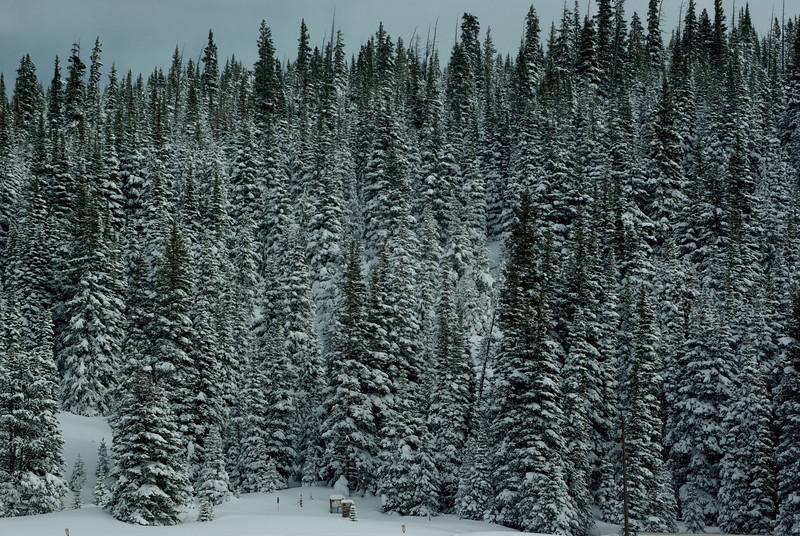 Colorado  #4.jpg