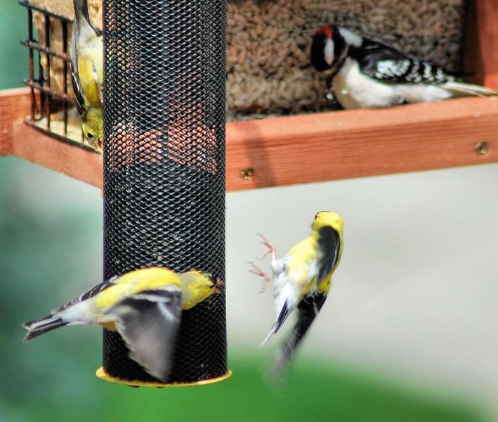 birds12.jpg