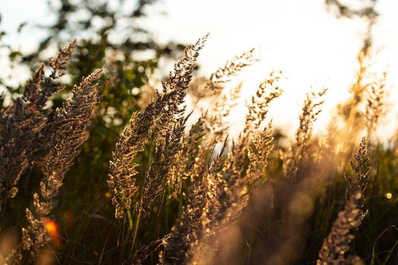Weeds Bornholm.jpg