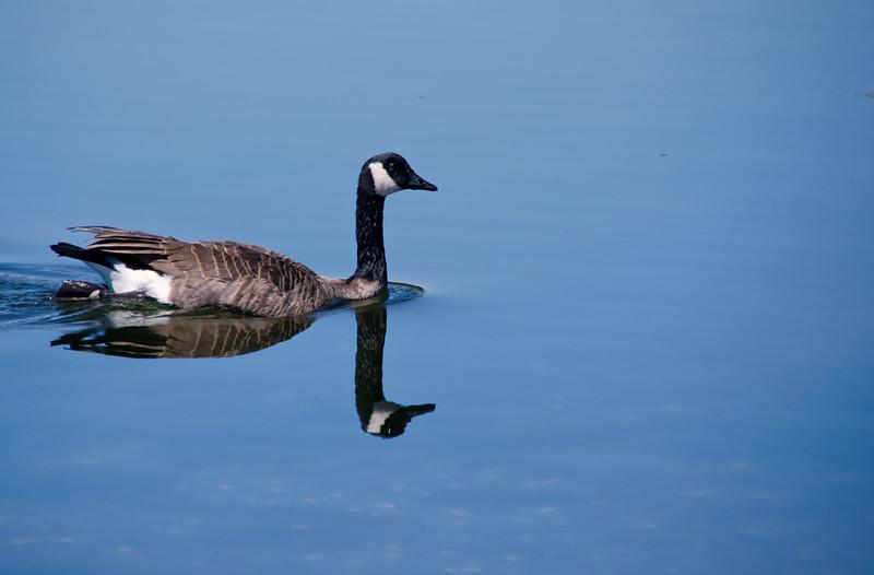 2014 Sept miscell_esquimalt lagoon-1.jpg