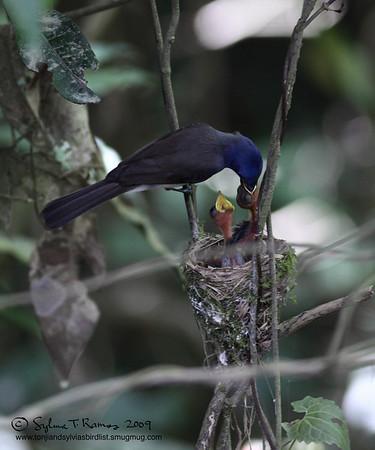 Sierra Madre Birds
