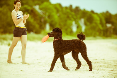 2012-05-26 Poodles At The Beach