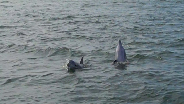 Dolphin in the channel
