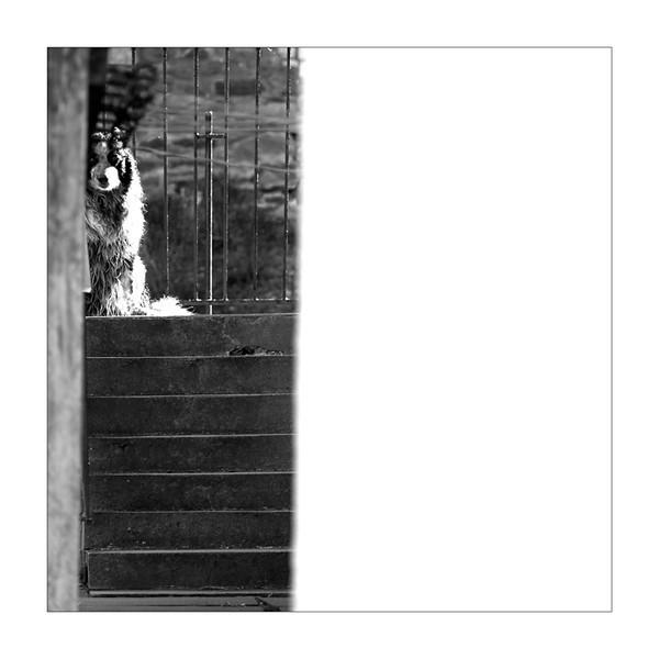 Dog - Cuddyside - Peebles - Observational