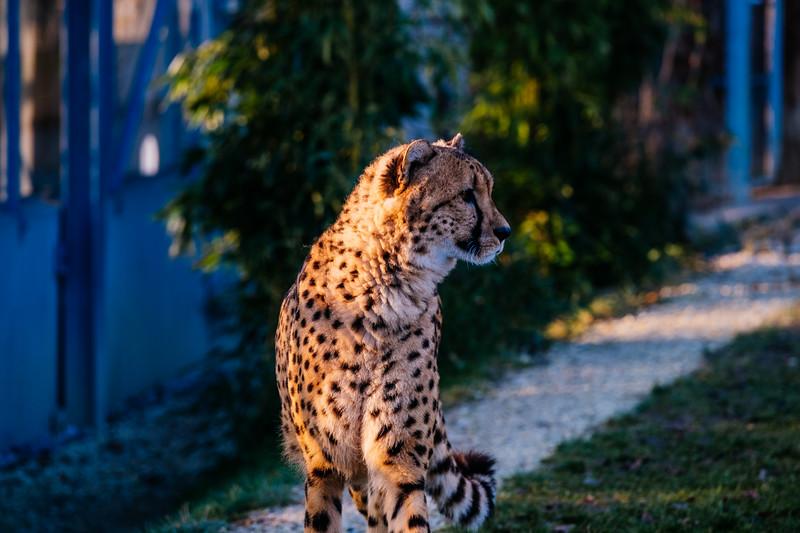 Tonis Zoo-0263.jpg