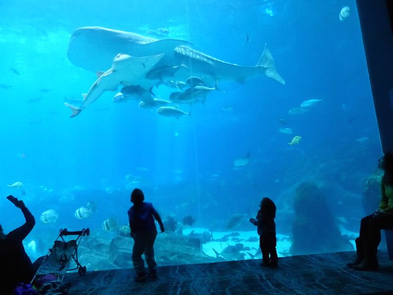 aquarium 5.JPG