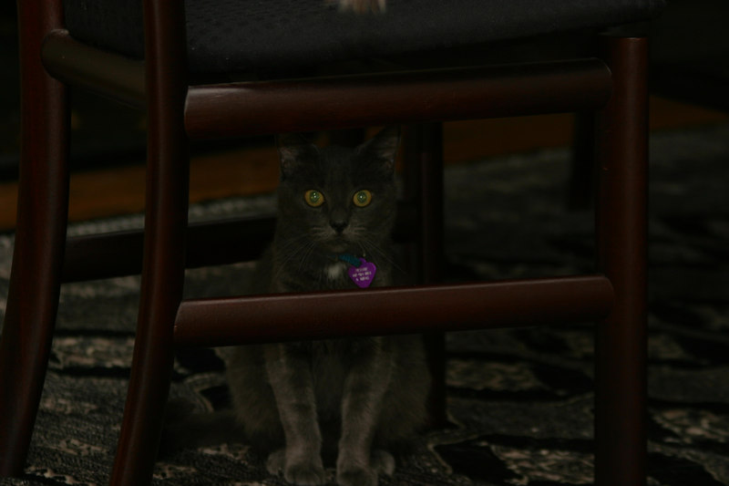Jessie hiding under the dining table.