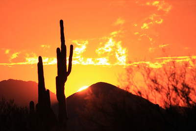 2011 Phoenix Area