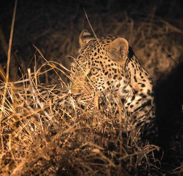 2014-08Aug-Thornybush Masters-13-Edit.jpg