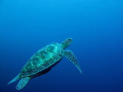 Sulawesi Sea