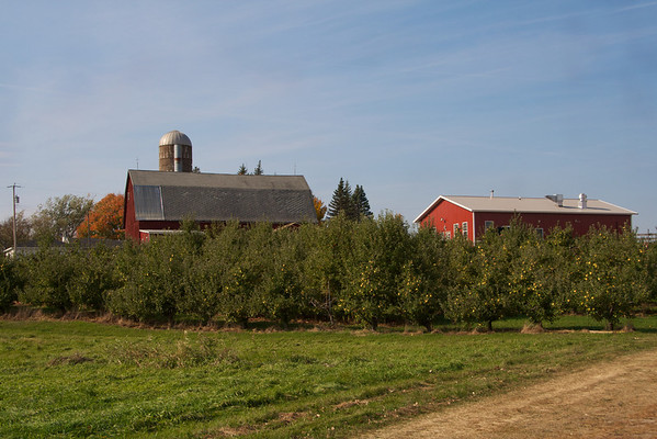 Pleasant Valley Apple Orchard 2011