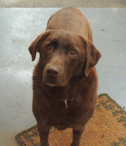 Millie from our housesittingjob in Bittern
