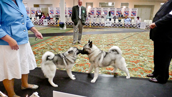 2012-05-12 SAT Best of Breed - additional pics plus revisions