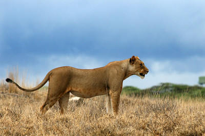 Kenya Safari 2013