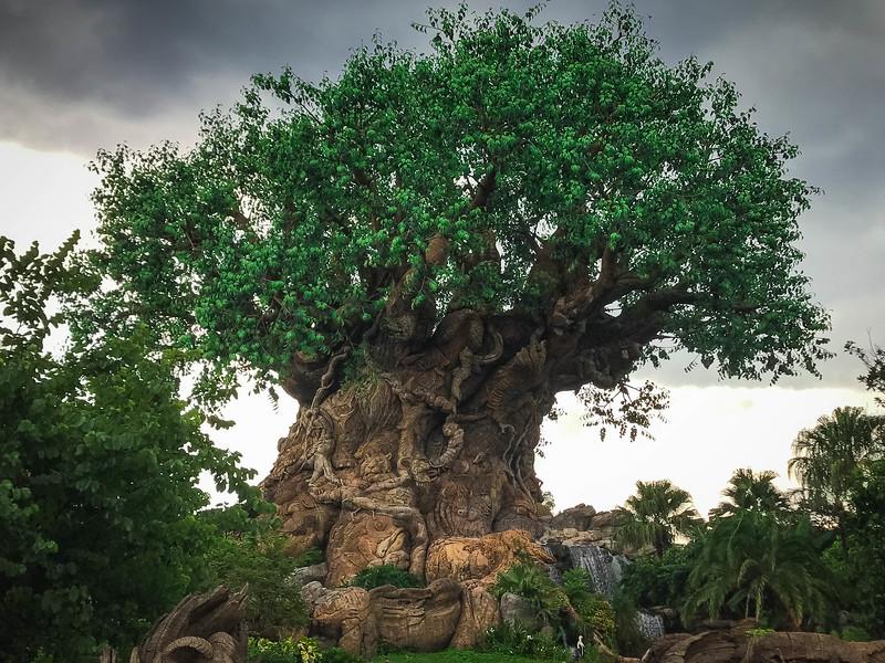 Disney World307.jpg