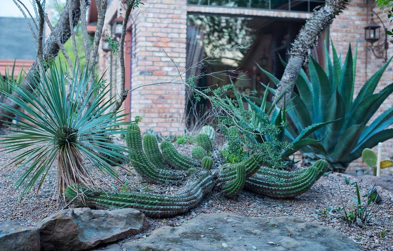 htx-cactus-space033.jpg