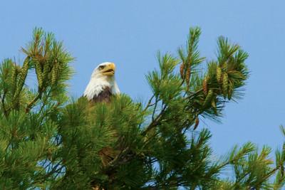 Last Retreat Eagles