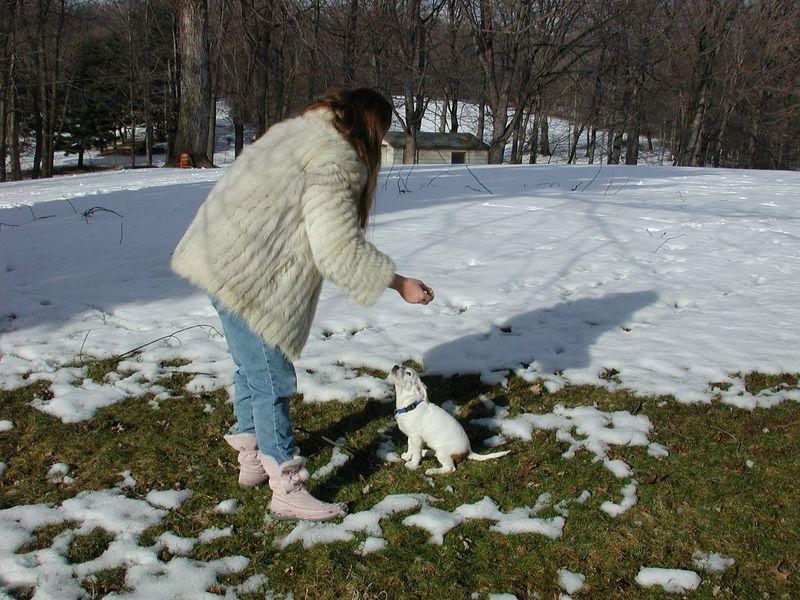 Feb 05- Puppies 009.jpg
