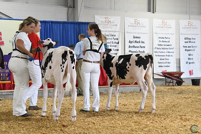 Northeast Fall National Holstein Show 2018