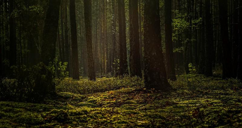 Forest Shadows-048.jpg