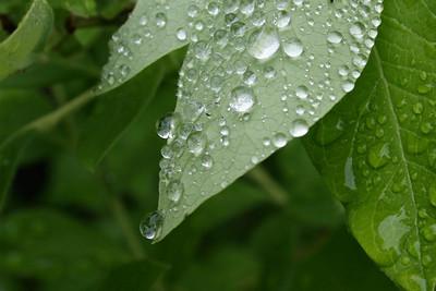 after rain falls