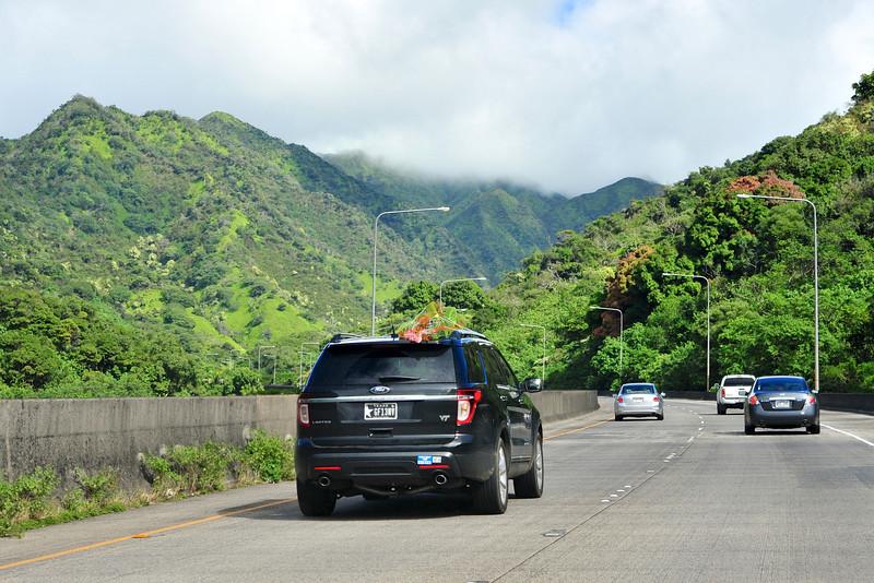 Hawaii_Christmas_Tree_6.jpg